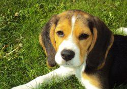 Forkæl din hund med godbidder, hvor indholdet er i top