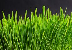 Nyd duften af nyslået græs